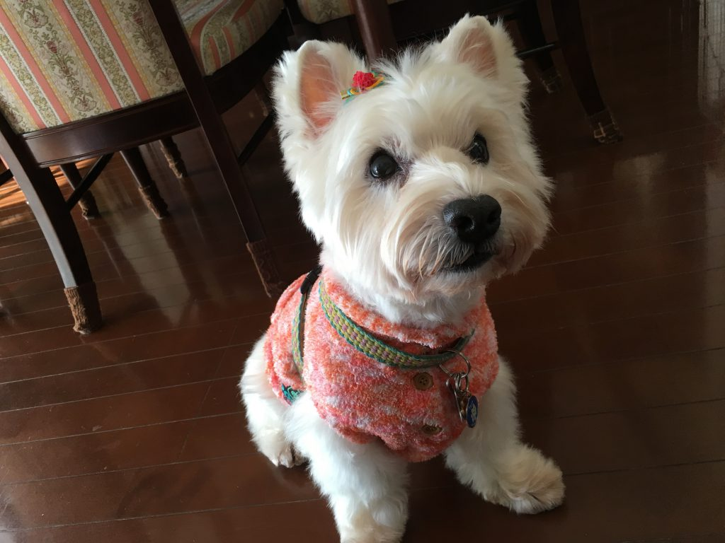 犬 刺繍前