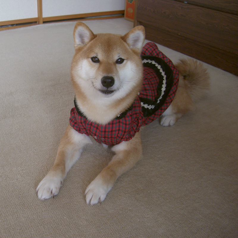 フォト刺繍 オーダー color-stitch 柴犬