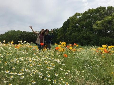 万博記念公園 大阪旅行 ポピーフェア 花畑
