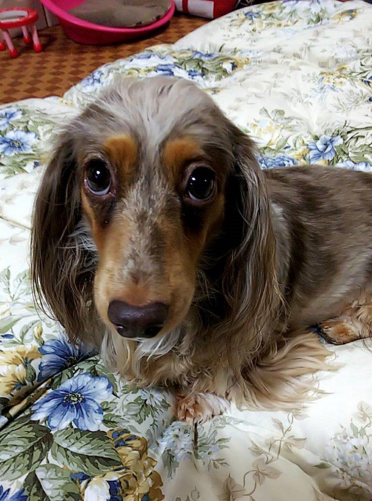 フォト刺繍 天使のカート ペットカート 愛犬