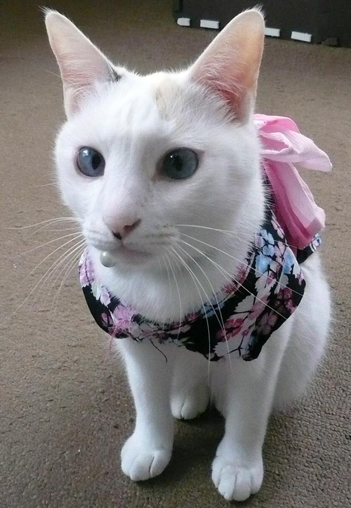 フォト刺繍 猫 ポーチ