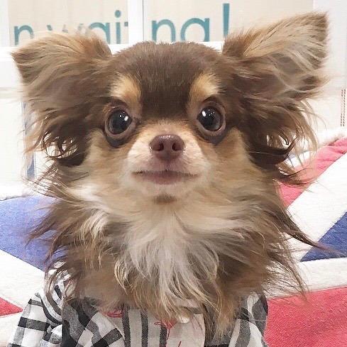 天使のカート フォト刺繍 愛犬